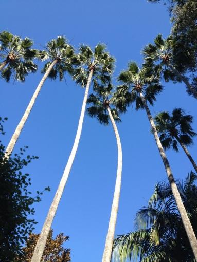 ATW Lake Shrine Palm trees