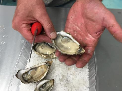 Jolly Oyster Market