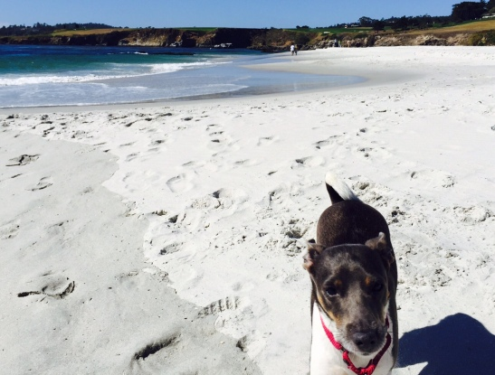 More than dog-friendly, Carmel-by-the-Sea is dog-loving (photo by Scott Bridges)